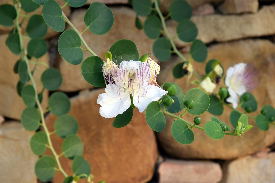 květiny u zdi